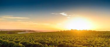 Valle del vino Fotografia Stock Libera da Diritti