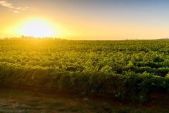 Valle del vino Immagini Stock Libere da Diritti