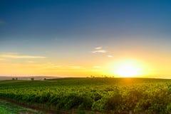 Valle del vino Fotografie Stock