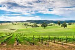 Valle del vino in Barossa Fotografia Stock Libera da Diritti