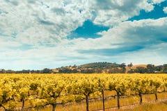 Valle del vino in Barossa, Australia Meridionale Fotografia Stock Libera da Diritti