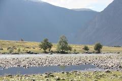 Valle dell'Altai Fotografia Stock Libera da Diritti