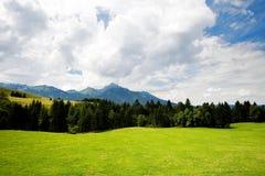 Valle dell'erba in foresta Immagini Stock Libere da Diritti