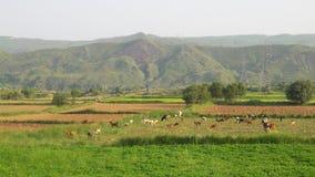Valle della gamma del sale Immagini Stock