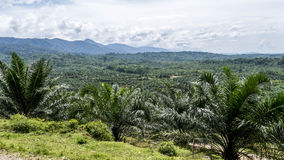 Valle della giungla da sopra Fotografia Stock