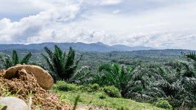 Valle della giungla da sopra Fotografie Stock Libere da Diritti