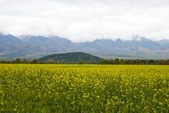 Valle della montagna. Fotografia Stock