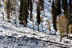 Valle della montagna al Kashmir in India Immagine Stock Libera da Diritti