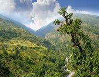 Valle della montagna con il fiume e campi a terrazze in Himalaya Fotografia Stock