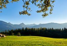 Valle della montagna di autunno al giorno soleggiato con cielo blu, la foresta e l'erba verde in Austria, regione di Salzkammergu immagine stock libera da diritti