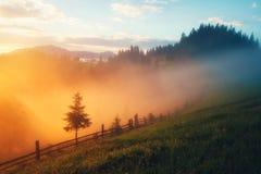 Valle della montagna durante l'alba Immagini Stock