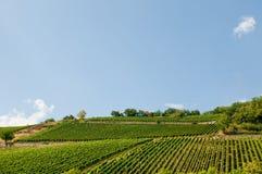 Valle della vigna in Germania Fotografie Stock