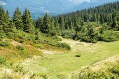 Valle delle montagne carpatiche Fotografia Stock