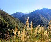 Valle delle montagne di estate con il sole nel Kazakistan, Asia Immagini Stock