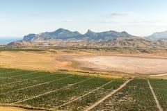 Valle delle vigne Fotografia Stock