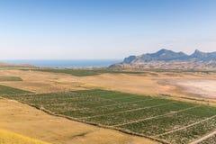 Valle delle vigne Immagine Stock