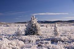 Valle dello Snowy Immagini Stock