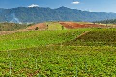 Valle di agricoltura Immagine Stock Libera da Diritti
