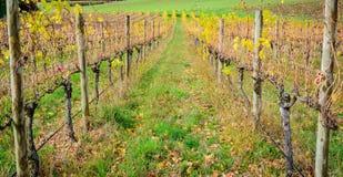 Valle di Autumn Wine Immagini Stock Libere da Diritti