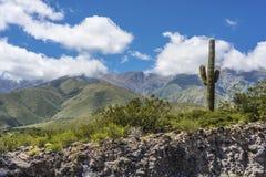 Valle di Calchaqui a Tucuman, Argentina Fotografia Stock Libera da Diritti