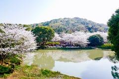 Valle di Cherry Blossom, wuxi, porcellana Immagine Stock