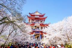 Valle di Cherry Blossom, wuxi, porcellana Fotografie Stock Libere da Diritti