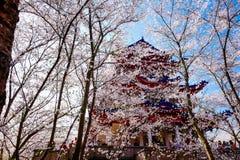 Valle di Cherry Blossom, wuxi, porcellana Fotografia Stock