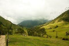 Valle di Cocora, sosta naturale della Colombia Immagini Stock