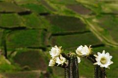 Valle di Colca, Perù Fotografie Stock