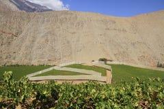 Valle di Elqui Fotografia Stock