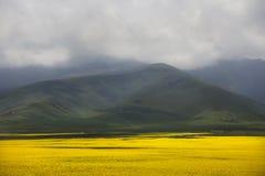 Valle di flowers-7907 Fotografia Stock
