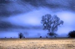 Valle di foschia Fotografia Stock Libera da Diritti
