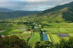 Valle di Hanalei, Kauai fotografie stock libere da diritti