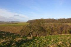 Valle di inverno con gli alberi del cratego Fotografia Stock