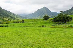 Valle di Ka'a'awa nel ranch di Kualoa Fotografia Stock Libera da Diritti