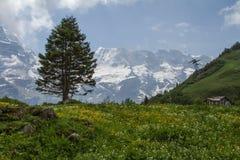 Valle di Lautenbrunen nelle alpi, Svizzera Fotografia Stock Libera da Diritti