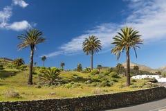 Valle di mille palme, Lanzarote, Spagna immagine stock libera da diritti