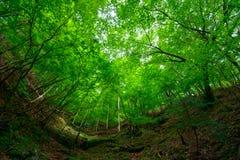 Valle di Nishizawa in Yamanashi, Giappone Fotografia Stock Libera da Diritti