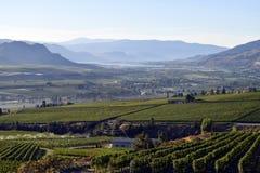 Valle di Okanagan della cantina della vigna dello spruzzatore di irrigazione Fotografie Stock