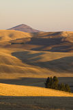 Valle di Palouse, Washington State orientale Fotografie Stock