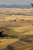 Valle di Palouse, Washington State orientale Fotografia Stock Libera da Diritti