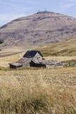 Valle di Palouse, Washington State orientale Fotografie Stock Libere da Diritti