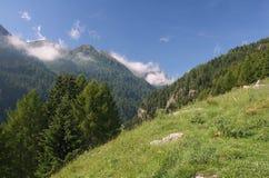 Valle di Pejo Fotografia Stock
