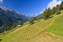 Valle di Pejo - di Trentino Immagini Stock