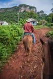 Valle di Vinales, Cuba - 24 settembre 2015: Coutrysi cubano locale Immagine Stock