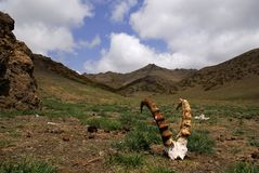 Valle di Yol, Mongolia fotografia stock libera da diritti