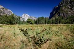 Valle di Yosemite Immagine Stock Libera da Diritti