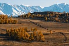 Valle e montagna della neve, montagne di Altai, cresta di Chuya, Siberia ad ovest Fotografia Stock Libera da Diritti