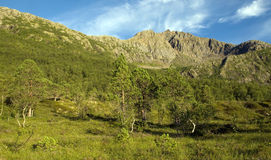 Valle e pini astratti fotografia stock