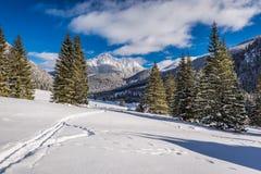 Valle en día soleado en invierno, montañas de Chocholowska de Tatra Imagenes de archivo
